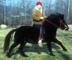 Al's first Horse - A shetland pony I had until my feet dragged on the ground...