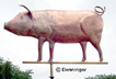 Go to Hog Weather Vane Page